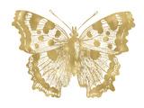 Butterfly 1 Golden White Posters par Amy Brinkman