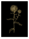 Thistle 2 Golden Black Prints by Amy Brinkman