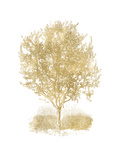 Olive Tree Golden White Posters by Amy Brinkman