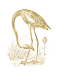 Flamingo 1 Golden White Posters by Amy Brinkman