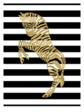 Zebra Black White Stripe Prints by Amy Brinkman
