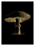 Mushroom Golden Black Print by Amy Brinkman