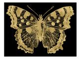 Butterfly 1 Golden Black Prints by Amy Brinkman