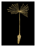 Dandelion 1 Golden Black Prints by Amy Brinkman