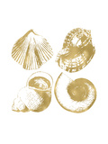 Seashell Quad Golden White Prints by Amy Brinkman