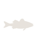 Beige Sea Bass Poster by  Jetty Printables