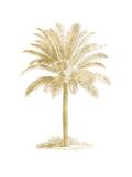 Palm Tree Golden White Prints by Amy Brinkman