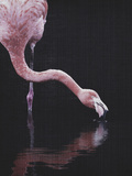 Tropical Flamingo Plakater af  LILA X LOLA