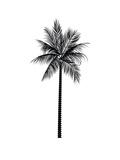 Black Palm Plakat av  Jetty Printables