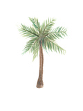 Watercolor Palm Tree Prints by  Jetty Printables