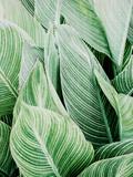 Tropica Leaves Affiches par  LILA X LOLA