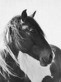 Wild Horses 2 Art by  LILA X LOLA