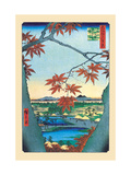 The Maple Trees Alu-Dibond von Ando Hiroshige