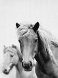Wild Horses 1 Poster by  LILA X LOLA