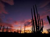 Bojum Tree and Cardon Cactus, Catavina Desert National Reserve, Baja del Norte, Mexico Metal Print by Gavriel Jecan