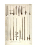 Aculei Acanthostauridum, Generis Acanthometrae, Generis Xiphacanthae, Generis Amphilonchae Metal Print by Ernst Haeckel
