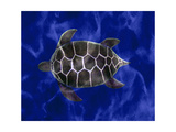 Seaturtle in Deep Blue Water Metal Print by Rich LaPenna