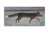 Winter Fox, 2014 Giclee Print by Ruth Addinall