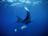 Un plongeur nage avec une raie manta géante, Mexique Reproduction sur métal par Jeffrey Rotman