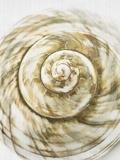 Sea Shell Art by  LILA X LOLA