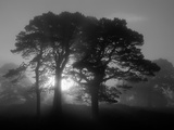 Scots Pine (Pinus Sylvestris) in Morning Mist, Glen Affric, Inverness-Shire, Scotland, UK, Europe Fotografisk tryk af Niall Benvie