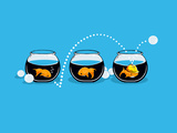 Prepared Fish - Funny GoldFish Posters by  Boots