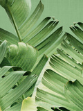 Tropical Leaves 2 Poster by  LILA X LOLA
