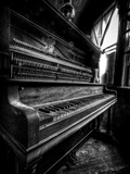 Musical Dreams Photographic Print by Stephen Arens
