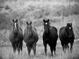 Horses, Montana, USA Photographic Print by Russell Young