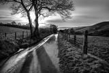 Gyldne minner Fotografisk trykk av Mark Gemmell