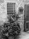 Late Summer in the Tuscan Village of Volpaia, Tuscany, Italy Photographic Print by Richard Duval