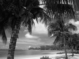 Palmiers sur la plage, Cayman Kai près de Rum Point, Îles Cayman, Antilles Papier Photo par Ruth Tomlinson