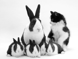 Blue Dutch Rabbit and Four 3-Week Babies and Black-And-White Kitten 写真プリント : ジェーン・バートン