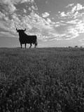 Giant Bull, Toros de Osborne, Andalucia, Spain Photographic Print by Gavin Hellier