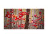 Autumn Leaves Near The Great Meadow Láminas por Michael Hudson