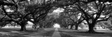 Louisiana, New Orleans, Brick Path Through Alley of Oak Trees Fotografisk tryk af Panoramic Images