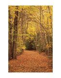 Autumn Path Posters by Michael Hudson