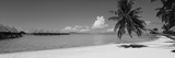 Palm Tree on the Beach, Moana Beach, Bora Bora, Tahiti, French Polynesia Fotografisk trykk av Panoramic Images,