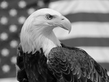 American Bald Eagle Portrait Against USA Flag Photographic Print by Lynn M. Stone