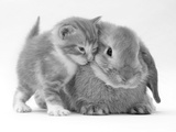 Domestic Kitten (Felis Catus) Next to Bunny, Domestic Rabbit 写真プリント : ジェーン・バートン