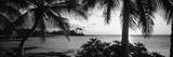 Palm Trees on the Coast, Kohala Coast, Big Island, Hawaii, USA Photographic Print by  Panoramic Images