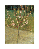 Almond Tree in Blossom, 1888 Láminas por Vincent van Gogh