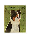 Australian Shepherd Posters by John W. Golden