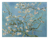 Almond Blossom, 1890 Art by Vincent van Gogh