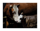 A Mother's Love Prints by Barry Hart