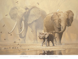 African Elephants and Namaqua Doves Posters by Ian Coleman
