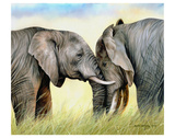 African Elephants Prints by Sarah Stribbling