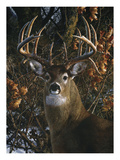 An Autumn Gentleman Posters by Carl Brenders