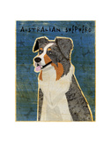 Australian Shepherd (Blue Merle) Prints by John W. Golden
