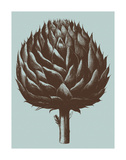 Artichoke 18 Poster by  Botanical Series
